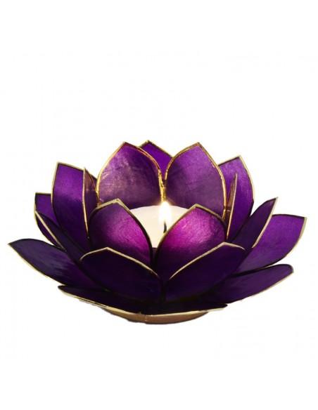 Lotus Stager, ultra violet 14 cm.