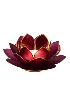 Lotus Stager, Red Violet 14 cm fra NaturPoteket.dk