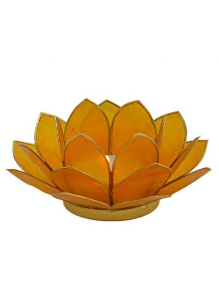 Lotus Stage, Dark Yellow 11 cm.